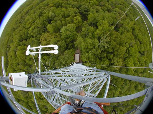 Above the forest canopy: looking down at the trees from a Michigan eddy-covariance tower.: Photograph by Chris Vogel