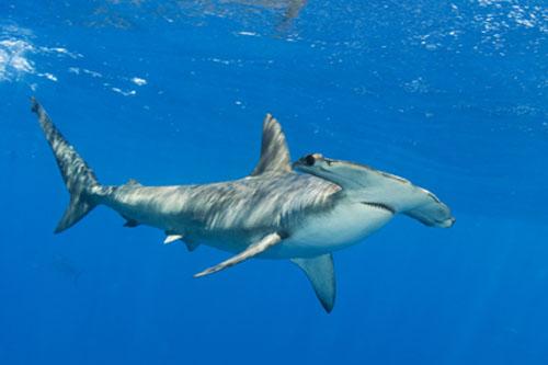 World's Second-Largest Shark Sanctuary Established by