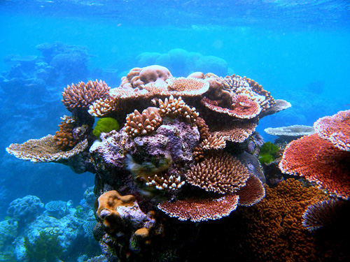 Coral Outcrop Flynn Reef: Photograph courtesy of Mission Blue
