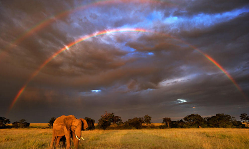 """The planet's most majestic species are being massacred for nothing nobler than vacation trinkets, hangover remedies and false: promises of miracle cancer cures,"" said Carter Roberts, President & CEO of WWF-US. ""President Obama's commitment to help stop the global crime wave that is emptying the continent's forests and savannas is welcome news."" Photograph courtesy of WWF"