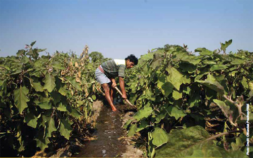 Boosting water benefits in West Bengal: Agricultural growth in West Bengal had slumped by more than half. As Eastern India's most populous state it was critical that scarce land resources were made as productive as possible. Research identified that a major hindrance to agricultural productivity was getting access to groundwater which, unlike in some other parts of India, is plentiful. New policies recommended by IWMI were adopted to improve groundwater access for smallholder farmers. Photograph by Chhandak Pradhan, courtesy of  IWMI.