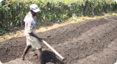 An agricultural program will train approximately 400 farmers and create more than 40 jobs: Photograph courtesy of PIH