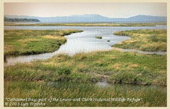 Lewis and Clark National Wildlife Refuge.: Photograph courtesy of NOAA