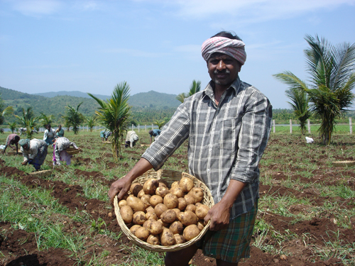 Potato farmer in India harvesting crops as a result of PepsiCo's agriculture and water conservation efforts. 2010: Photograph courtesy of PepsiCo.