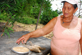 Margarita Amabeja holds out her hands full of golden rice grains and rough brown manioc roots: Margarita Amabeja holds out her hands full of golden rice grains and rough brown manioc roots - the first results of a strategy to adjust the agricultural cycles to the seasonal floods and droughts in the vast plains of Beni, in northeastern Bolivia. Photograph by Franz Chávez/IPS