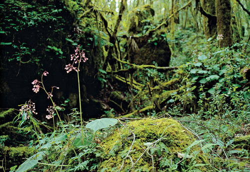In the Sierra Gorda Biosphere Reserve: Photography by Ewan Burns