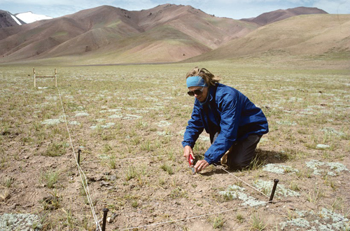 My wife Kay clips vegetation on a plot to determine biomass, species composition, and diversity.: Photograph from Tibet Wild by George B. Schaller. Reproduced by permission of Island Press.