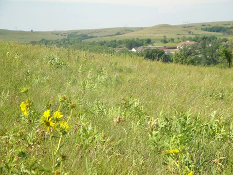 Scientists have found that U.S. Midwest drought reduced prairie grass growth most in June.: Photograph courtesy of NSF Konza Prairie LTER Site
