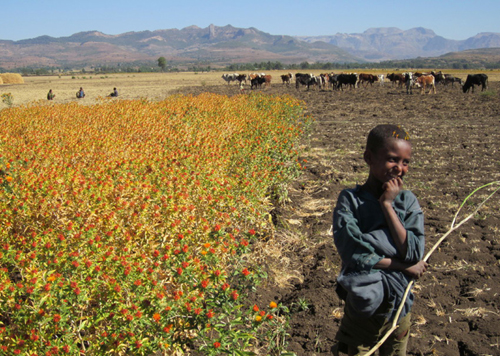 60 % of the Sub-Saharan population depend on the agricultural sector for their livelihoods.: Photograph and text from the Report. Photograph courtesy of UNEP.
